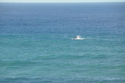 jan 10 whale
