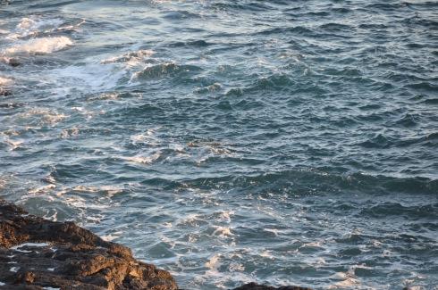 poipu sea turtle